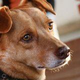 Blitz da Saúde para os Pets no Parque Villa Lobos